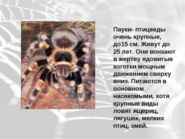Пауки- птицееды очень крупные, до15 см. Живут до 25 лет. Они вонзают в жертву...
