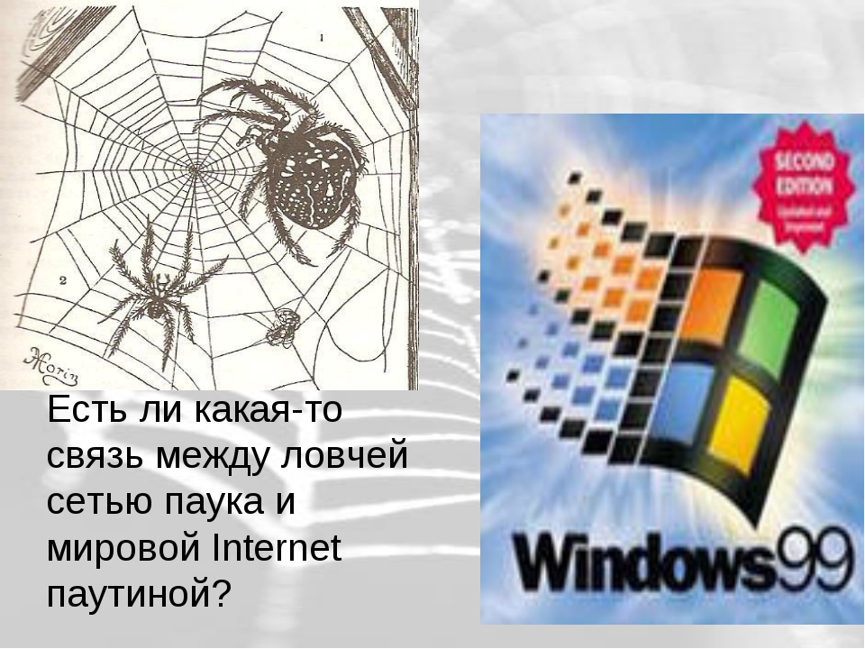 Есть ли какая-то связь между ловчей сетью паука и мировой Internet паутиной?