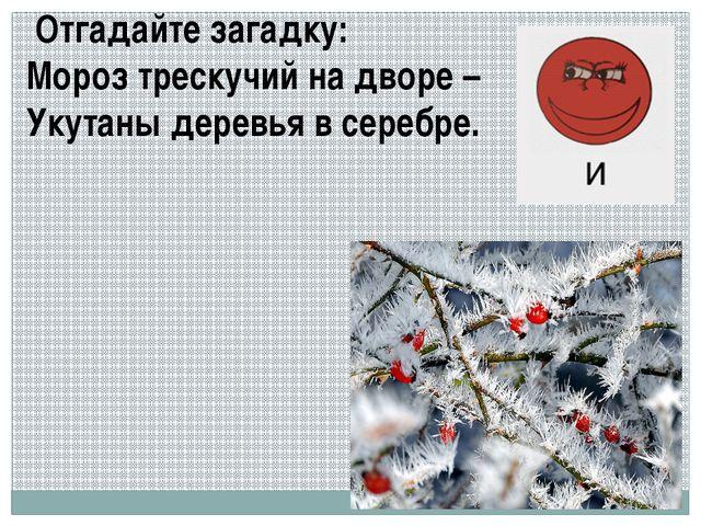 Отгадайте загадку: Мороз трескучий на дворе – Укутаны деревья в серебре.