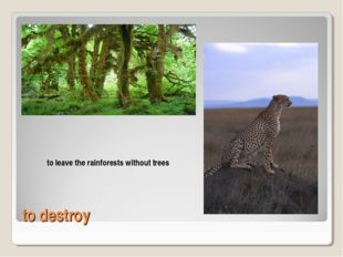 to destroy to leave the rainforests without trees