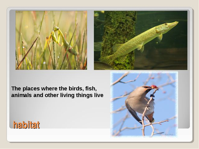 habitat The places where the birds, fish, animals and other living things live