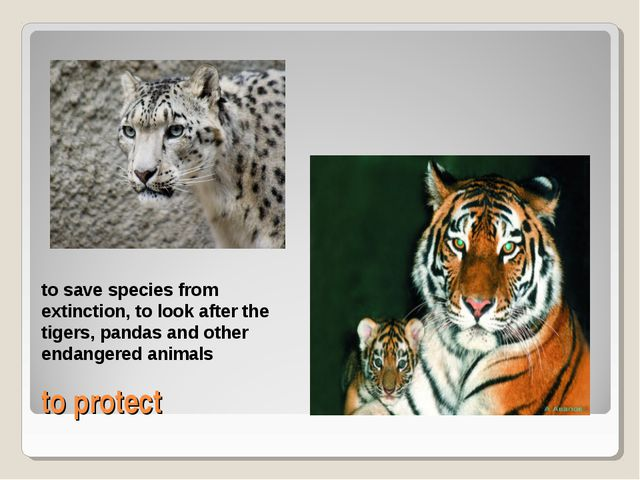 to protect to save species from extinction, to look after the tigers, pandas...