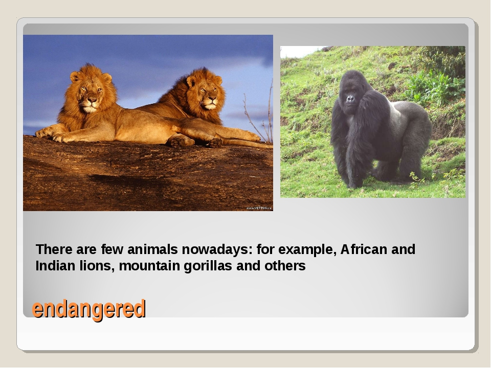 endangered There are few animals nowadays: for example, African and Indian li...