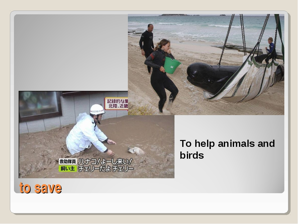 to save To help animals and birds