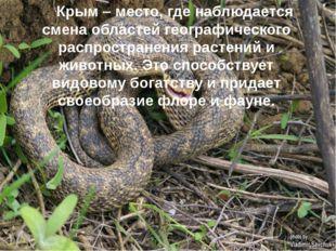 Крым – место, где наблюдается смена областей географического распространения