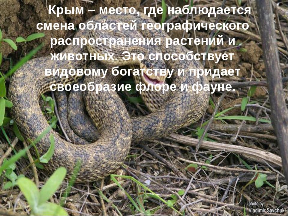 Крым – место, где наблюдается смена областей географического распространения...