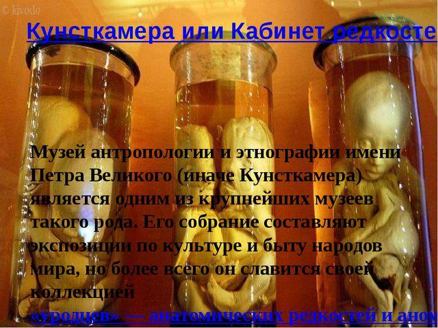 Кунсткамера или Кабинет редкостей Музей антропологии и этнографии имени Петра...