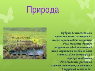 Природа Будучи вечнозелеными многолетними растениями после перезимовки получа