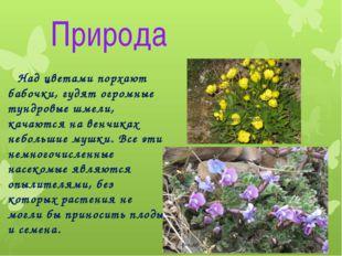 Природа Над цветами порхают бабочки, гудят огромные тундровые шмели, качаются