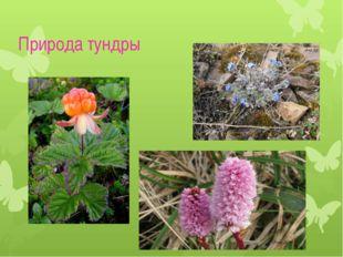 Природа тундры