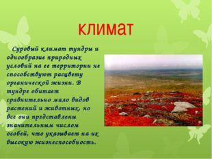 климат Суровый климат тундры и однообразие природных условий на ее территории