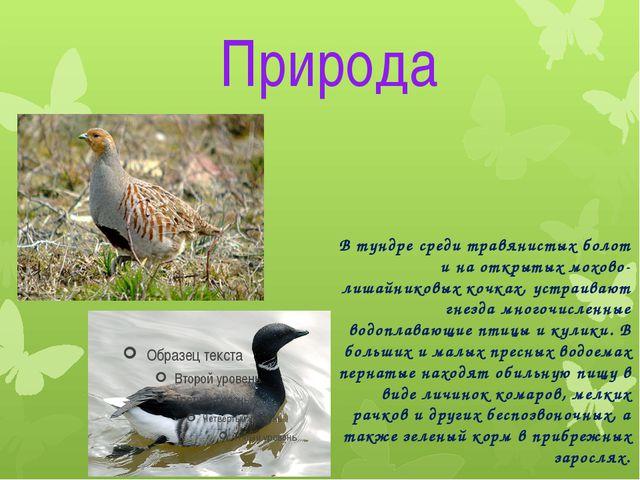 Природа В тундре среди травянистых болот и на открытых мохово-лишайниковых ко...