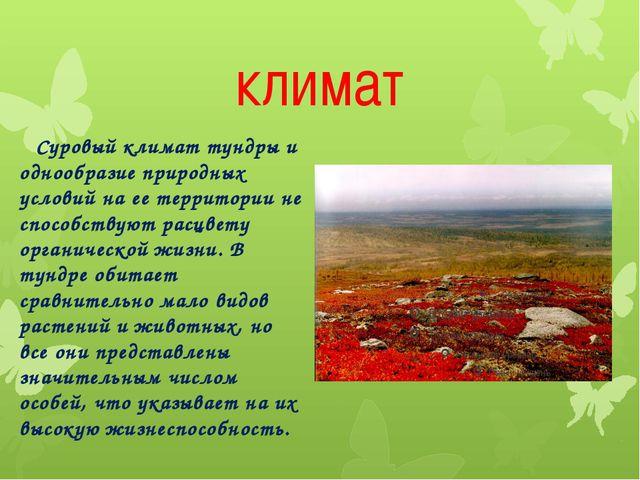 климат Суровый климат тундры и однообразие природных условий на ее территории...