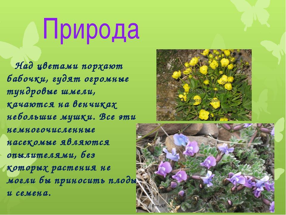 Природа Над цветами порхают бабочки, гудят огромные тундровые шмели, качаются...