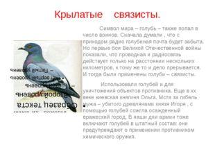 Крылатые связисты. Символ мира – голубь – также попал в число воинов. Сначала