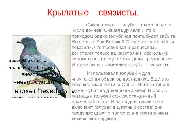 Крылатые связисты. Символ мира – голубь – также попал в число воинов. Сначала...