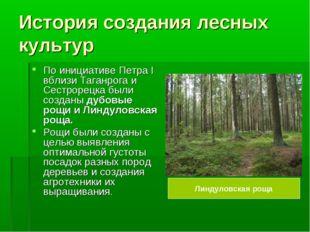 История создания лесных культур По инициативе Петра I вблизи Таганрога и Сест