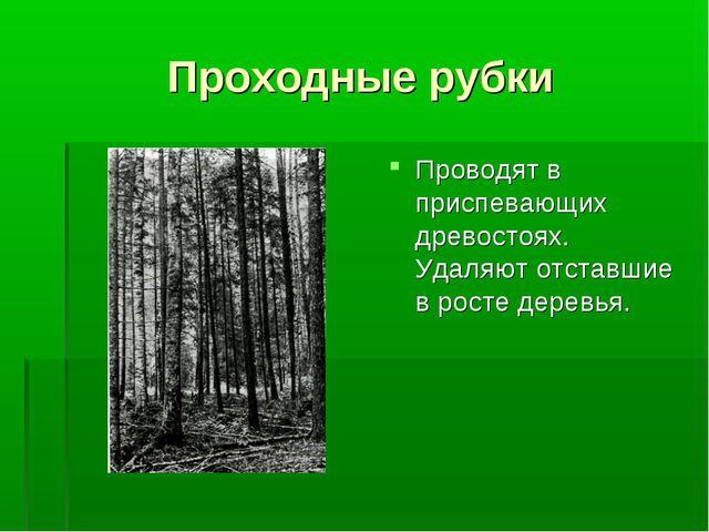 Проходные рубки Проводят в приспевающих древостоях. Удаляют отставшие в росте...