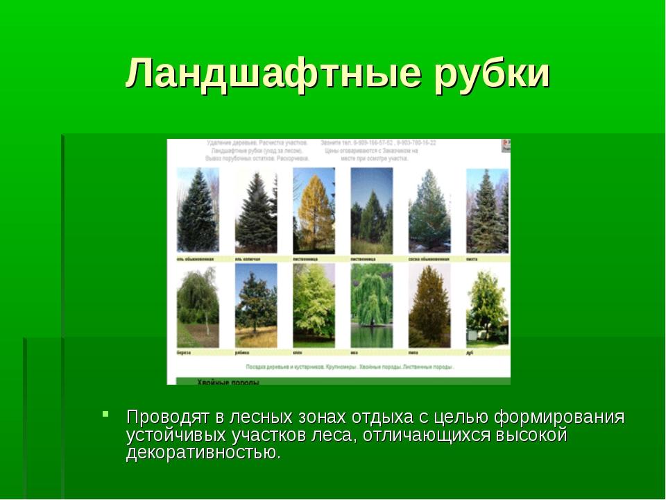 Ландшафтные рубки Проводят в лесных зонах отдыха с целью формирования устойчи...