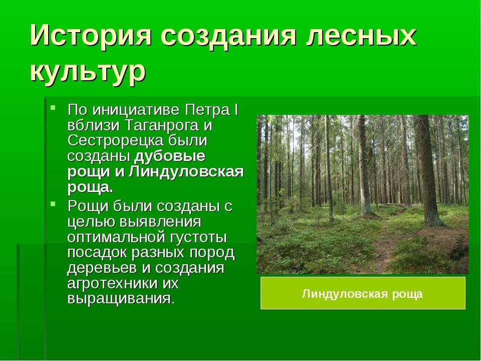 История создания лесных культур По инициативе Петра I вблизи Таганрога и Сест...