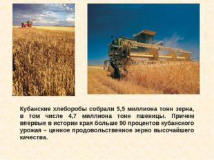 Кубанские хлеборобы собрали 5,5 миллиона тонн зерна, в том числе 4,7 миллиона