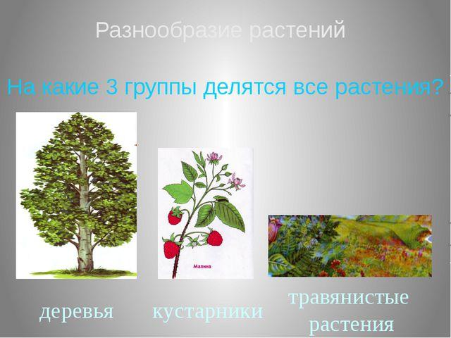 Разнообразие растений На какие 3 группы делятся все растения? деревья кустарн...
