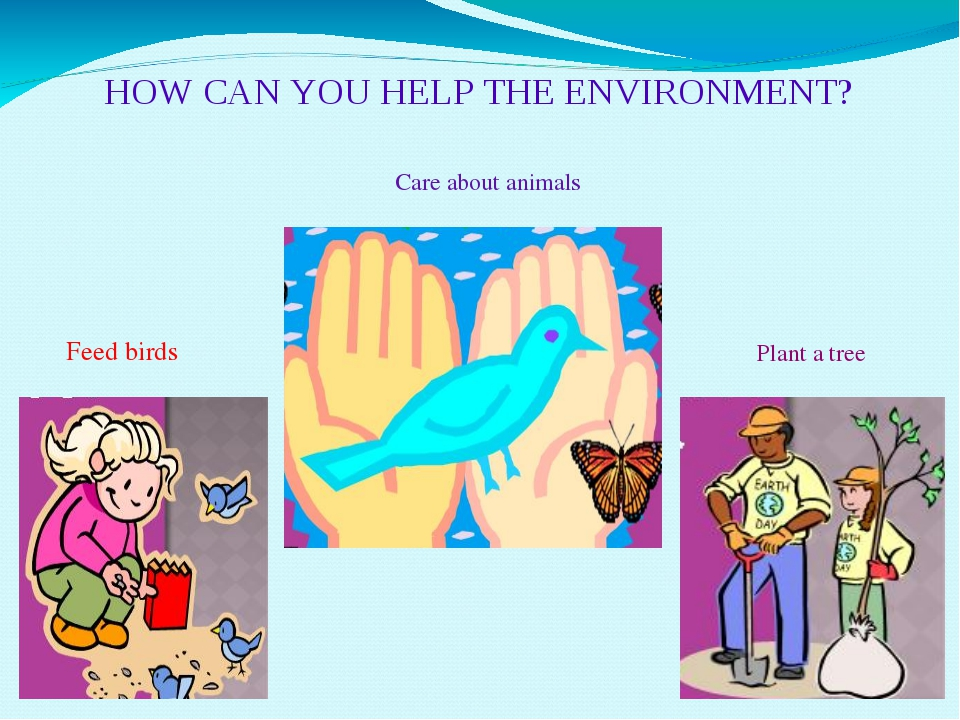 HOW CAN YOU HELP THE ENVIRONMENT? Feed birds Care about animals Plant a tree
