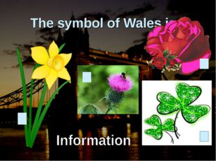 The symbol of Wales is…