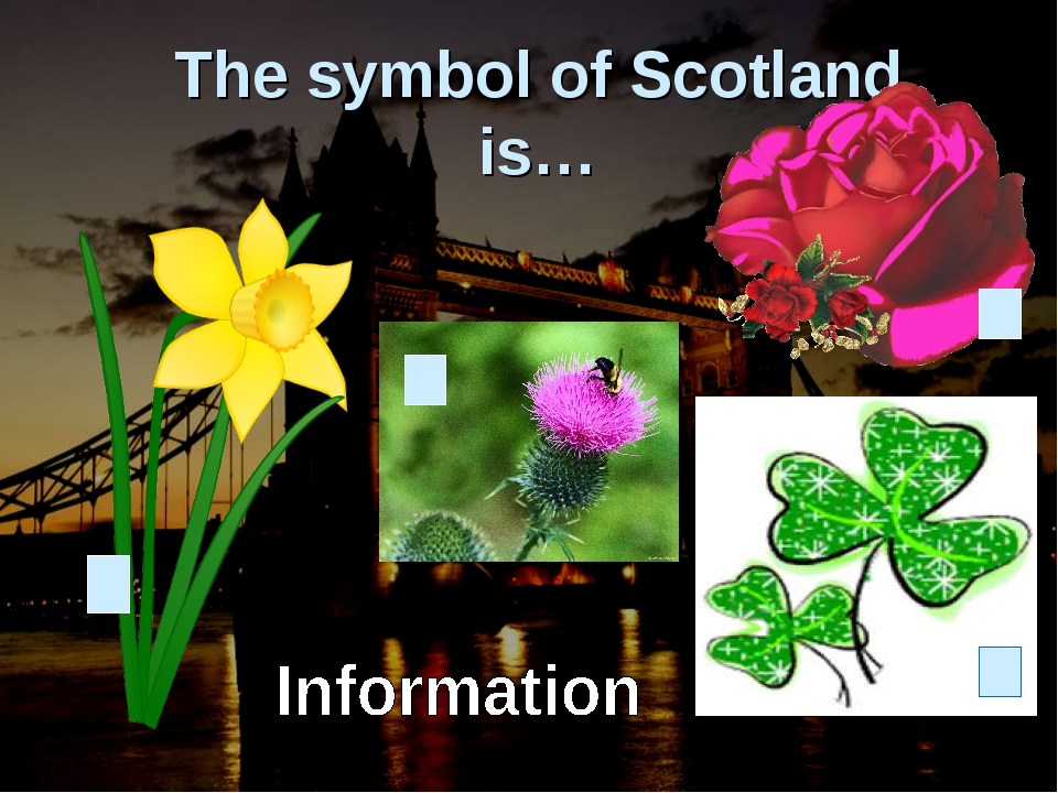The symbol of Scotland is…