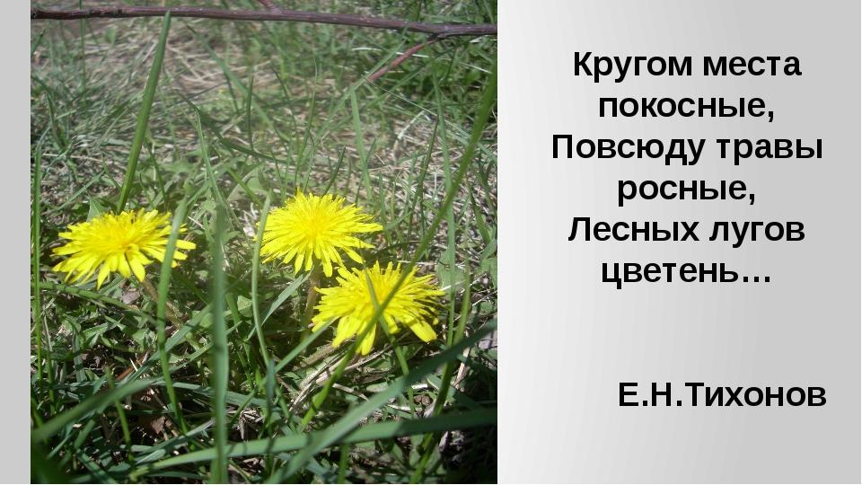 Кругом места покосные, Повсюду травы росные, Лесных лугов цветень… Е.Н.Тихонов