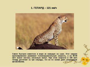 1. ГЕПАРД – 121 км/ч Самое быстрое животное в мире из живущих на суше. Этот х