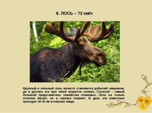 8. ЛОСЬ – 72 км/ч Крупный и сильный лось нечасто становится добычей хищников,