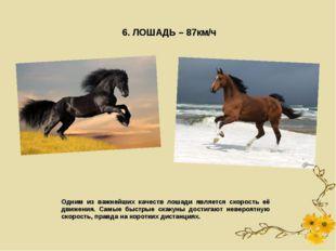 6. ЛОШАДЬ – 87км/ч Одним из важнейших качеств лошади является скорость её дви