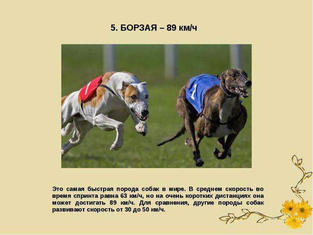 5. БОРЗАЯ – 89 км/ч Это самая быстрая порода собак в мире. В среднем скорость...