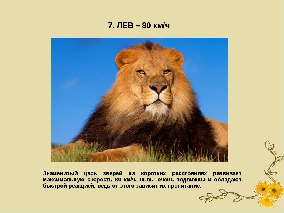 7. ЛЕВ – 80 км/ч Знаменитый царь зверей на коротких расстояниях развивает мак...