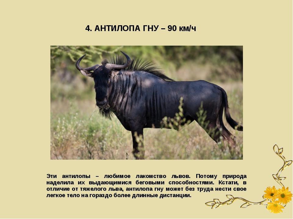 4. АНТИЛОПА ГНУ – 90 км/ч Эти антилопы – любимое лакомство львов. Потому прир...