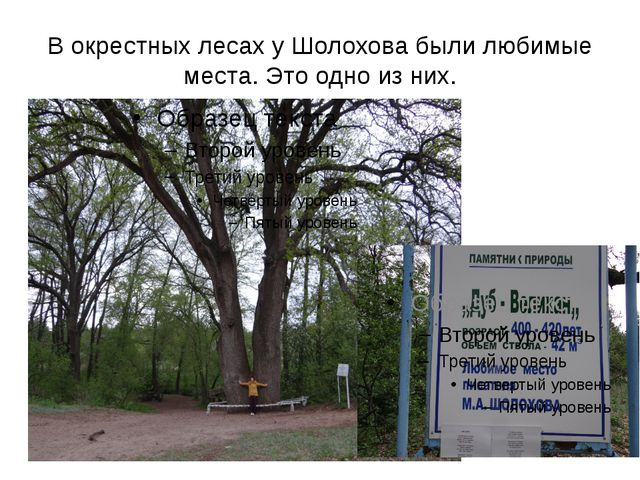 В окрестных лесах у Шолохова были любимые места. Это одно из них.