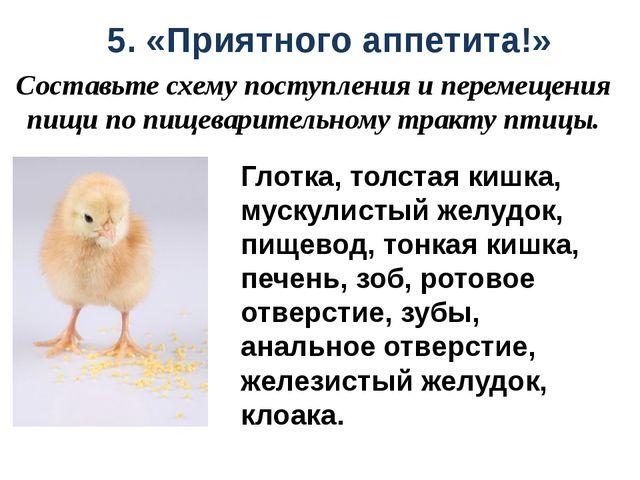5. «Приятного аппетита!» Составьте схему поступления и перемещения пищи по пи...