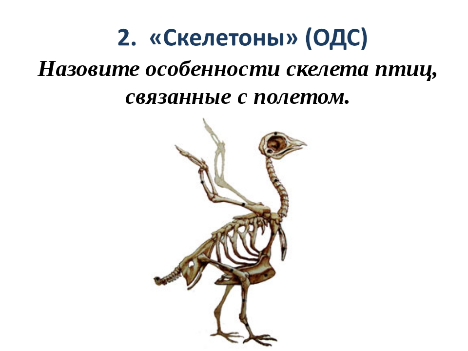 Назовите особенности скелета птиц, связанные с полетом.