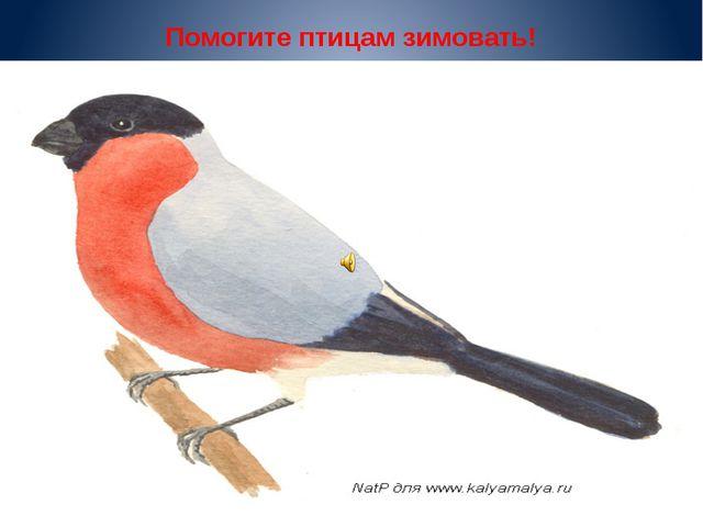 Помогите птицам зимовать!