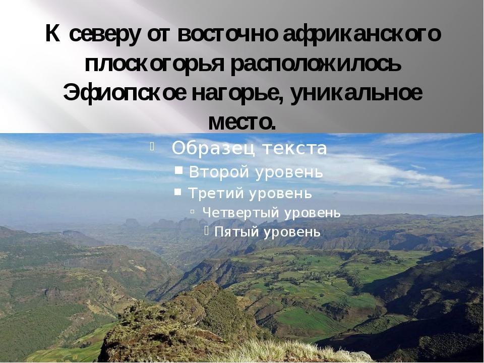 К северу от восточно африканского плоскогорья расположилось Эфиопское нагорье...