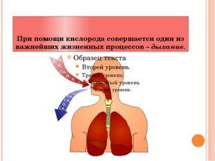 При помощи кислорода совершается один из важнейших жизненных процессов – дыха