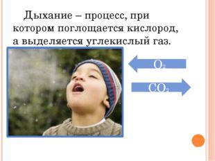 Дыхание – процесс, при котором поглощается кислород, а выделяется углекислый