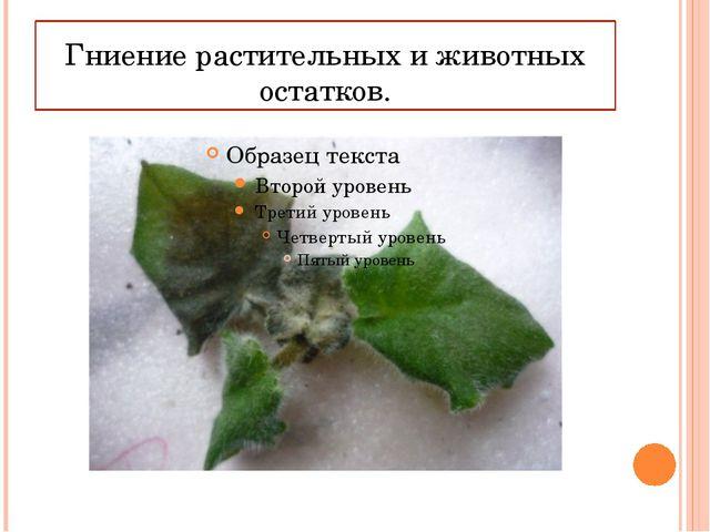 Гниение растительных и животных остатков.