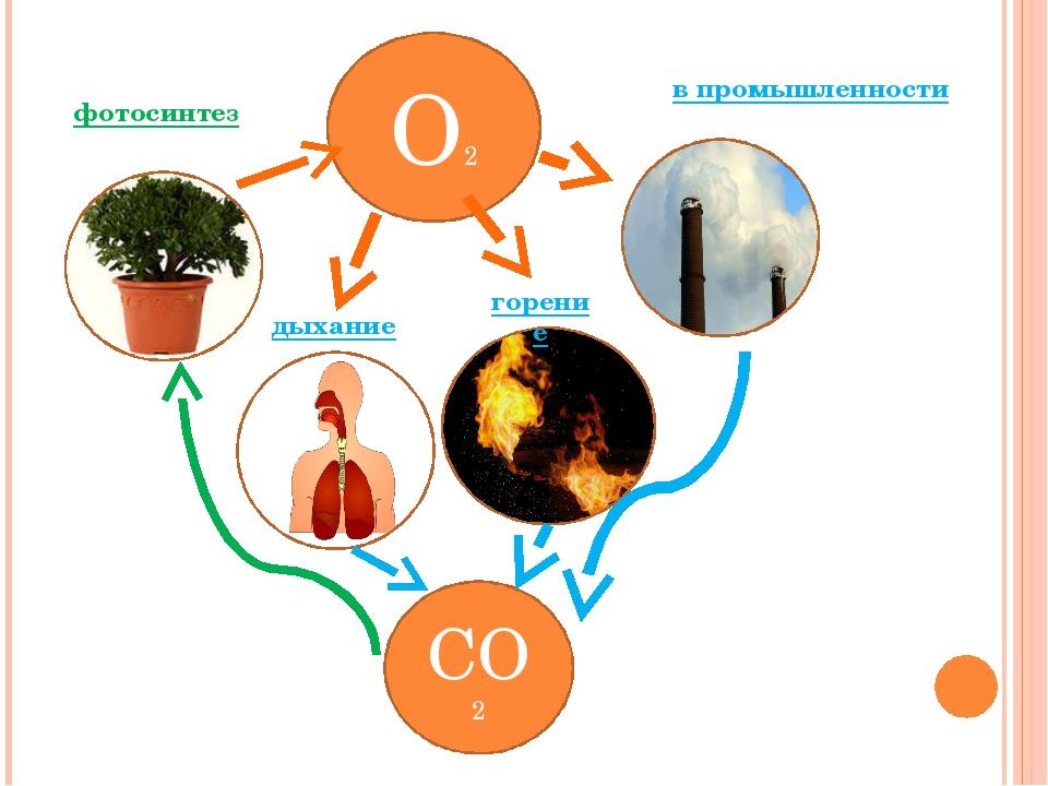 О2 СО2 в промышленности фотосинтез дыхание горение