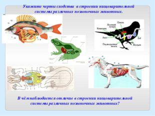В чём наблюдается отличие в строении пищеварительной системы различных позвон