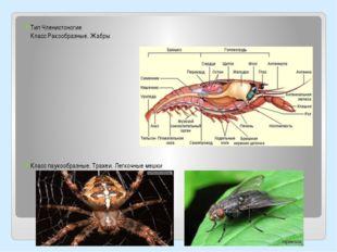 Тип Членистоногие Класс Ракообразные. Жабры Класс паукообразные. Трахеи. Лег