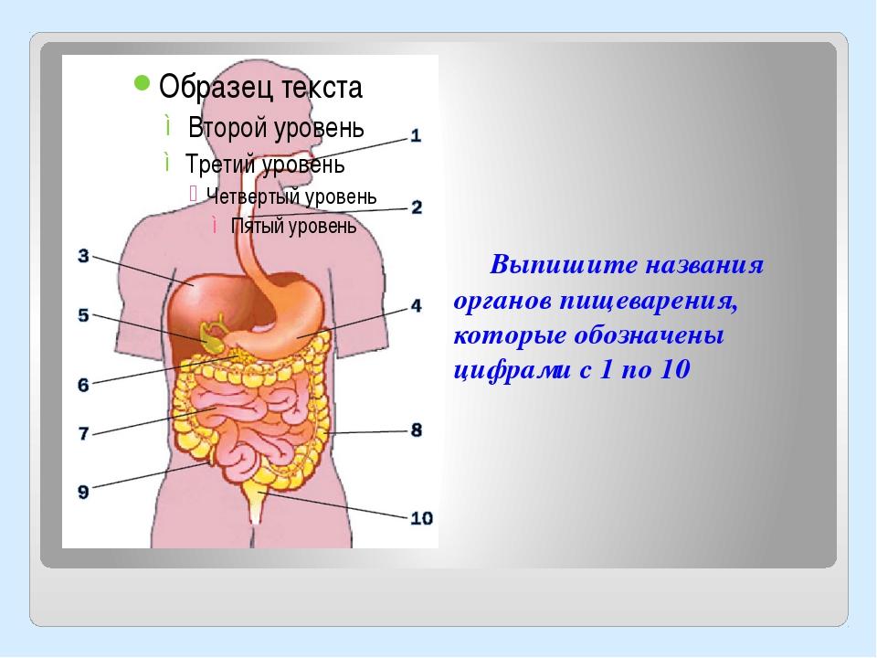 Выпишите названия органов пищеварения, которые обозначены цифрами с 1 по 10