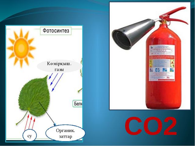СO2 Көмірқыш. газы су Органик. заттар