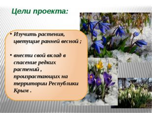 Цели проекта: Изучить растения, цветущие ранней весной ; внести свой вклад в